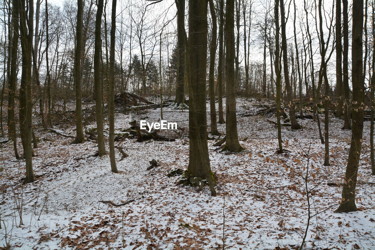 forest, tree, nature, tranquility, tranquil scene, no people, winter, tree trunk, day, woodland, landscape, scenics, outdoors, bare tree, beauty in nature, snow, branch, sky