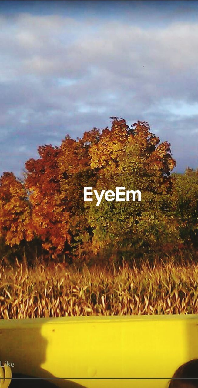 tree, nature, growth, no people, beauty in nature, tranquility, day, plant, sky, outdoors, autumn, landscape, scenics