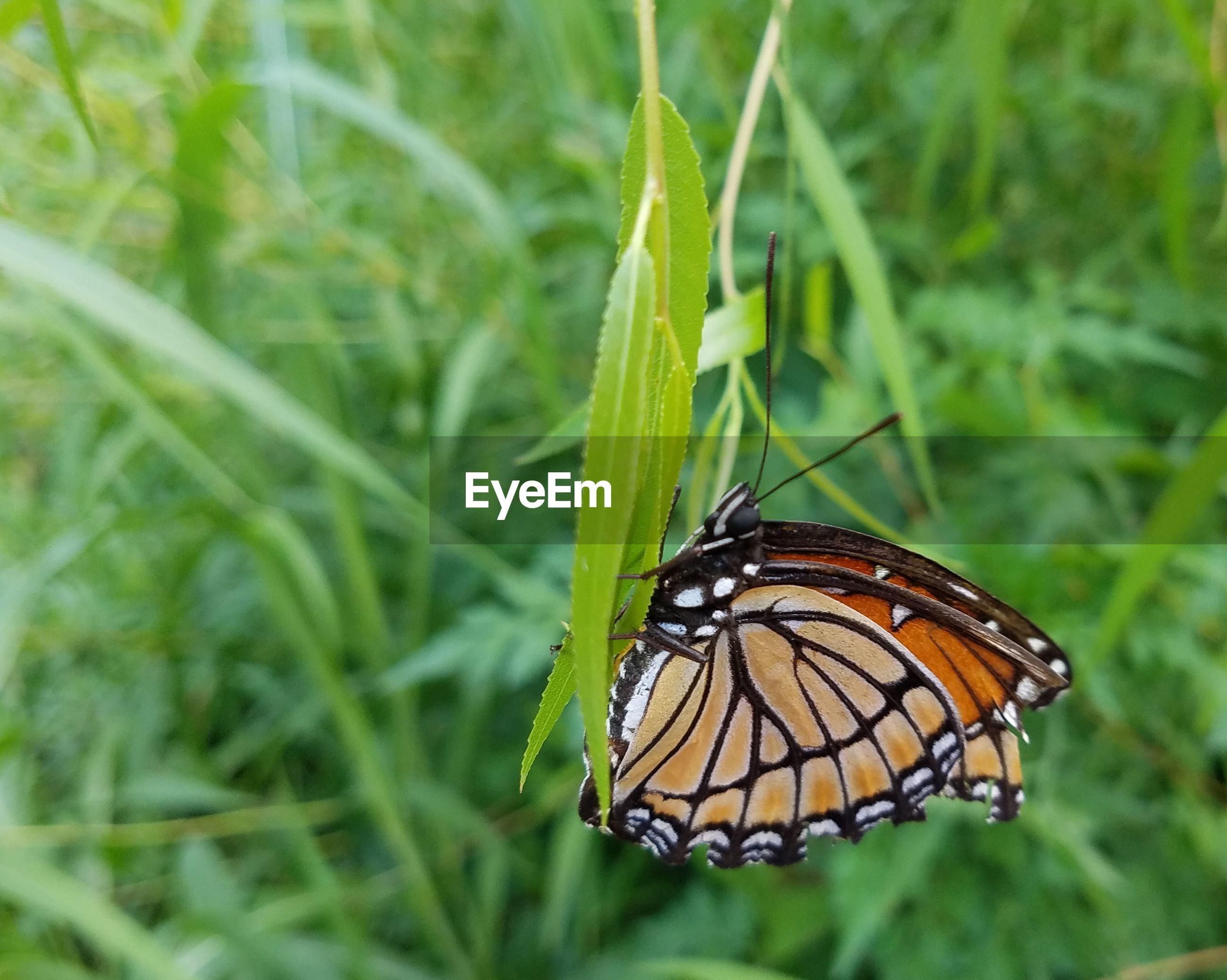 BUTTERFLY PERCHING ON GRASS