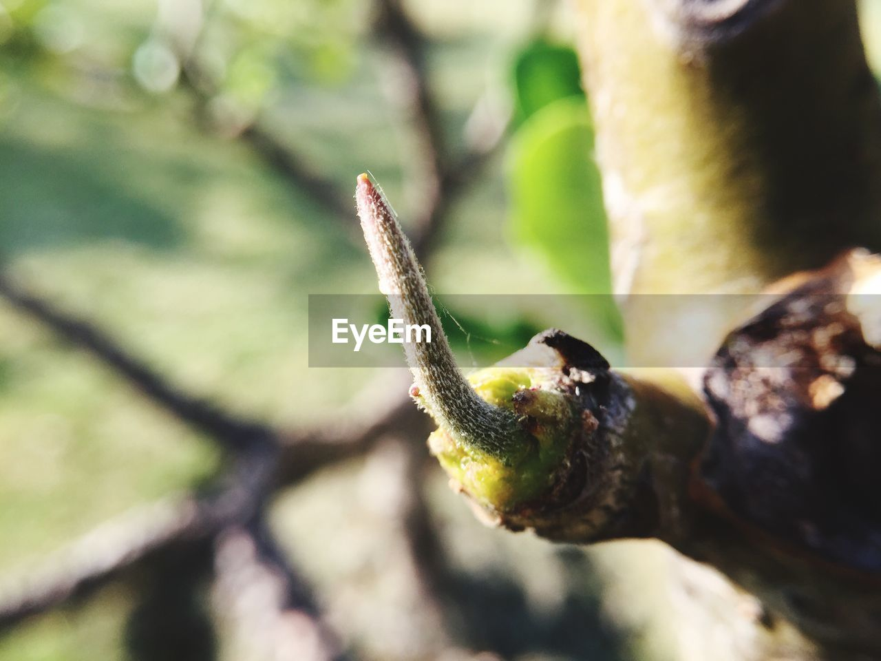 nature, growth, day, close-up, outdoors, focus on foreground, plant, no people, beauty in nature