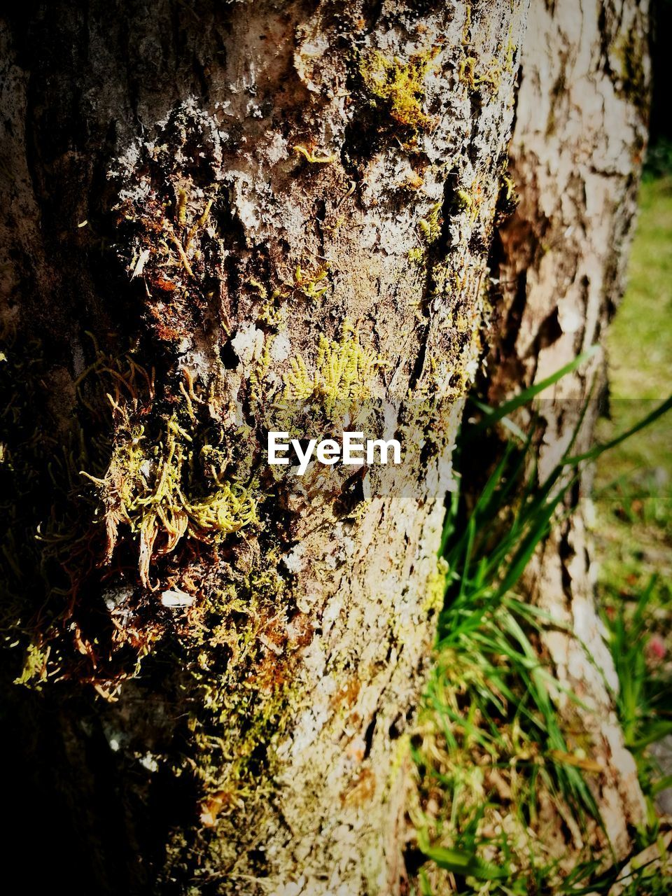 tree trunk, tree, textured, nature, growth, bark, rough, day, close-up, no people, fungus, lichen, forest, outdoors, beauty in nature