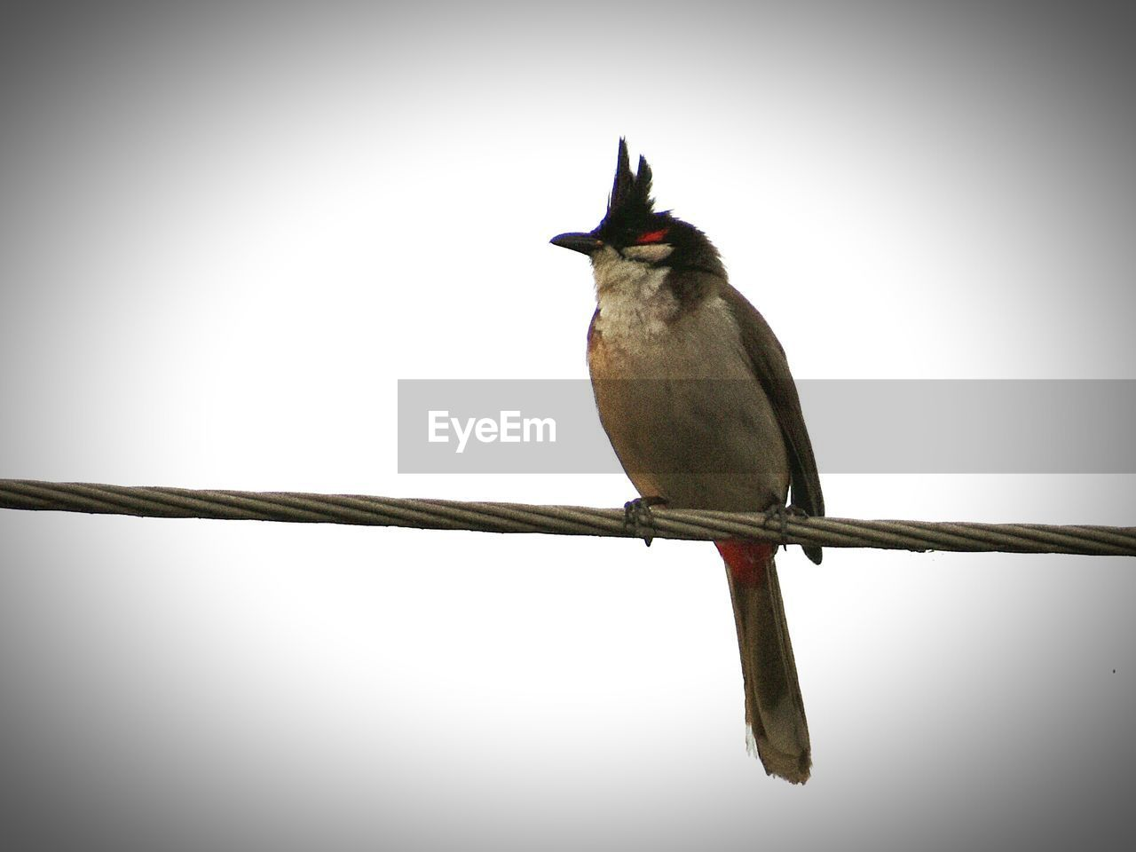 bird, animal themes, one animal, animals in the wild, perching, animal wildlife, no people, clear sky, day, full length, outdoors, nature, close-up