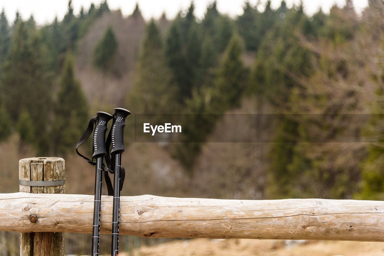 wood - material, tree, day, no people, plant, focus on foreground, nature, outdoors, metal, sunlight, railing, selective focus, barrier, still life, photography themes, close-up, bamboo - material, fence, beauty in nature, water