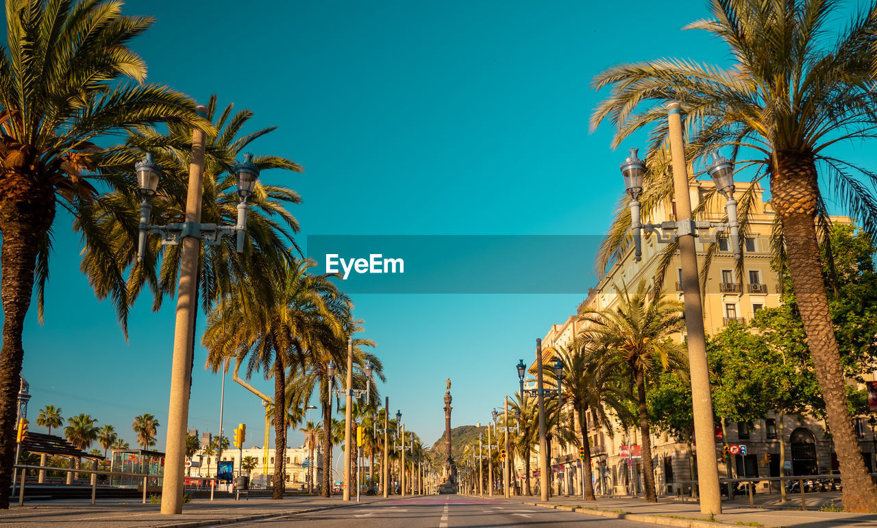 palm tree, tropical climate, tree, sky, plant, nature, clear sky, building exterior, city, architecture, day, built structure, blue, street, no people, treelined, growth, tree trunk, direction, outdoors, tropical tree, coconut palm tree, palm leaf