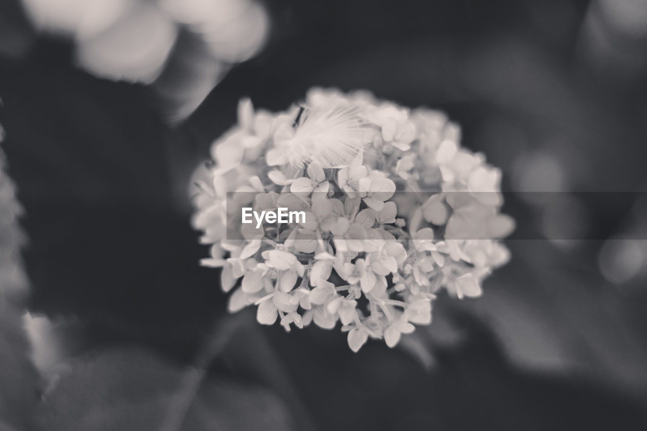 flower, flowering plant, plant, freshness, beauty in nature, vulnerability, fragility, growth, close-up, flower head, petal, focus on foreground, selective focus, nature, inflorescence, day, outdoors, holding, real people, one person, bunch of flowers, flower arrangement