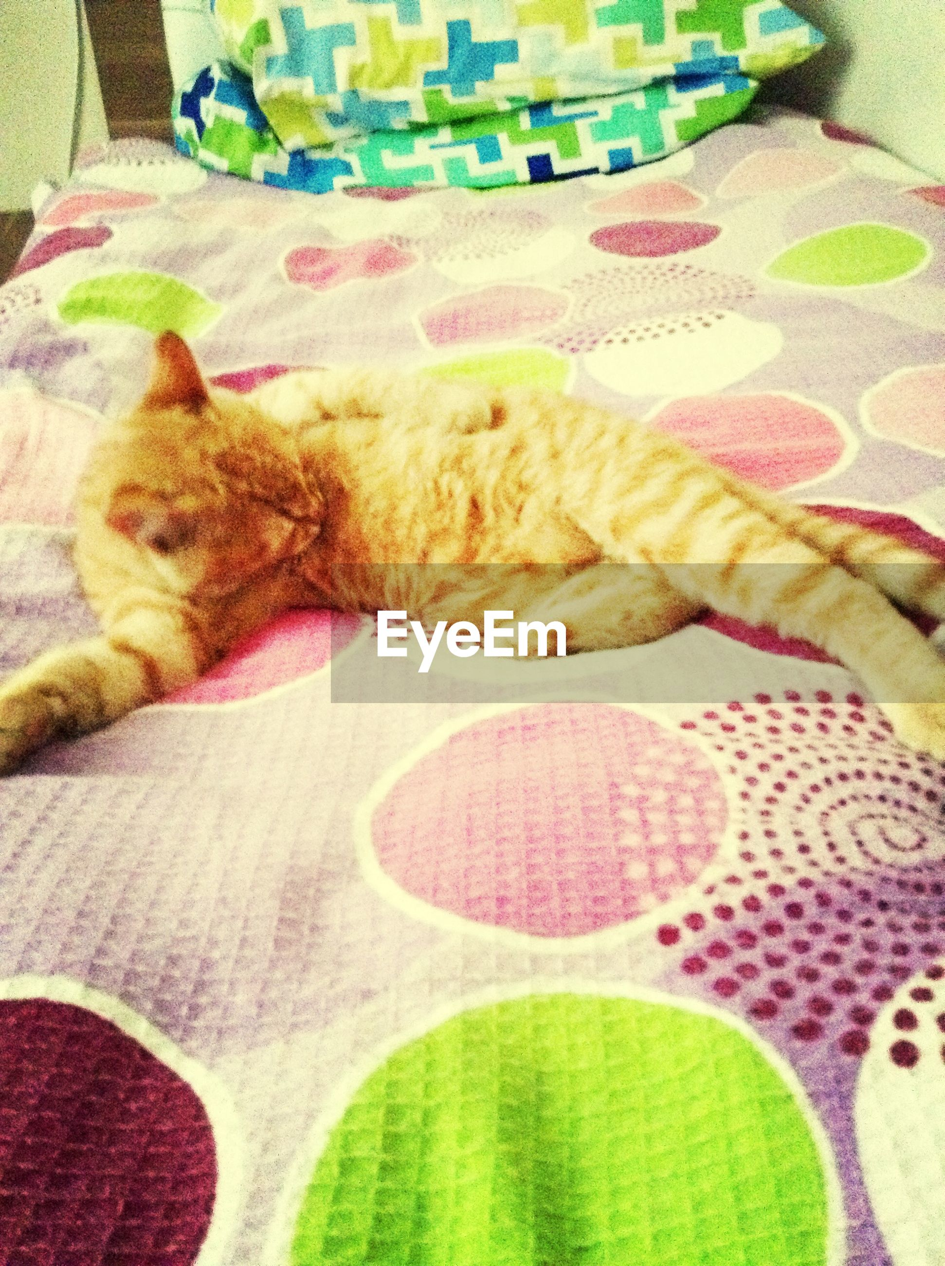 indoors, domestic animals, pets, bed, relaxation, sleeping, mammal, resting, high angle view, domestic cat, home interior, animal themes, cat, blanket, bedroom, sofa, lying down, one animal, sheet, fabric