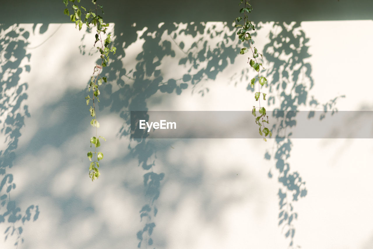 plant, growth, nature, no people, day, beauty in nature, plant part, leaf, close-up, outdoors, focus on foreground, green color, freshness, flower, flowering plant, tree, vulnerability, low angle view, fragility, selective focus