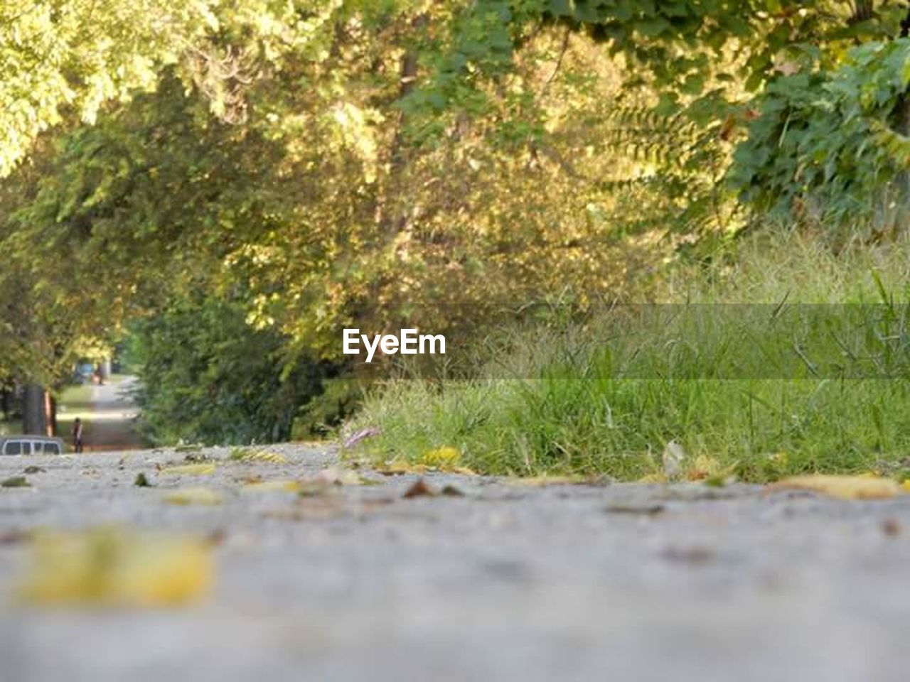 road, selective focus, outdoors, day, grass, nature, no people, plant, tree, growth, flower, close-up