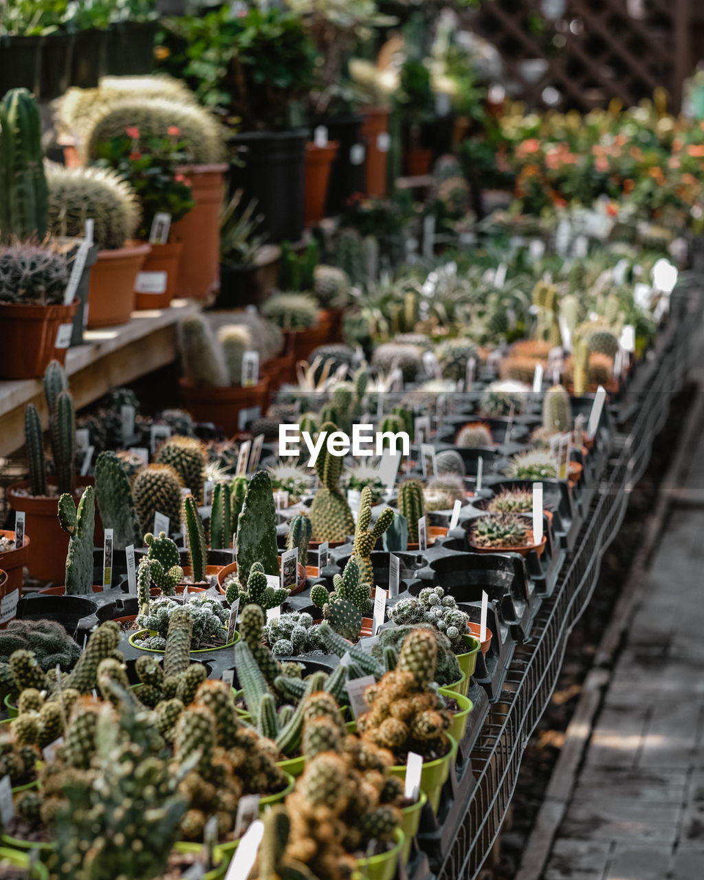 HIGH ANGLE VIEW OF FLOWERS IN MARKET