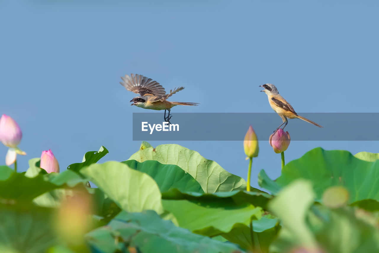 animal themes, animals in the wild, animal, animal wildlife, plant, flying, flower, flowering plant, beauty in nature, mid-air, plant part, leaf, nature, one animal, growth, vertebrate, bird, freshness, no people, selective focus, flower head, pollination
