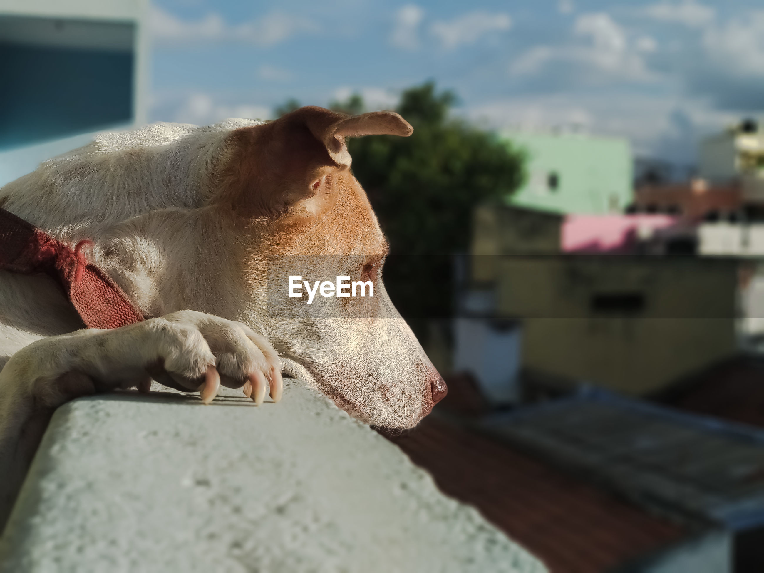 View of a dog relaxing outdoors