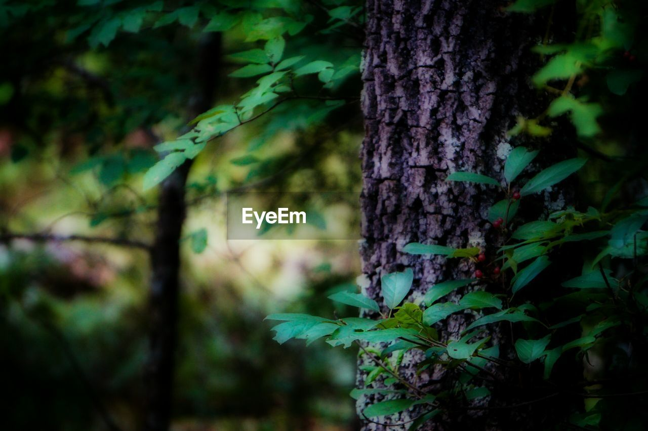tree trunk, nature, growth, focus on foreground, tree, no people, outdoors, green color, close-up, beauty in nature, day, plant, animal themes