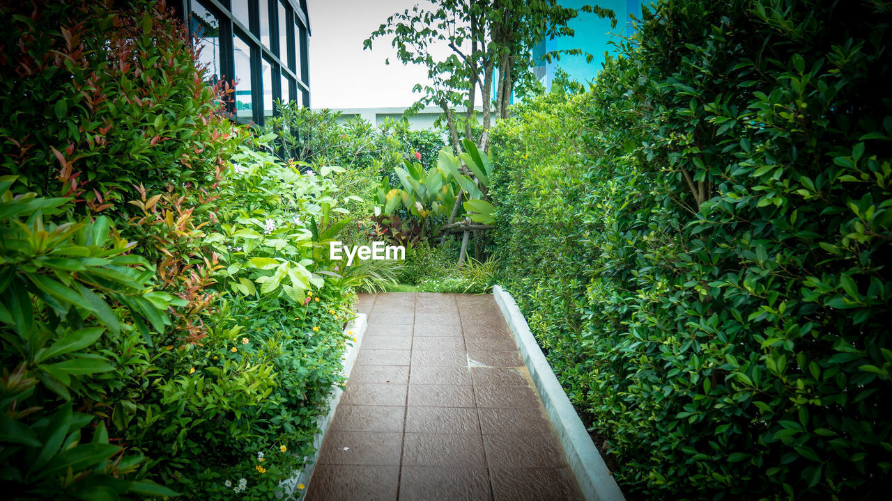 plant, growth, green color, tree, nature, day, no people, direction, footpath, beauty in nature, plant part, leaf, outdoors, the way forward, tranquility, wood - material, architecture, foliage, lush foliage, built structure, long