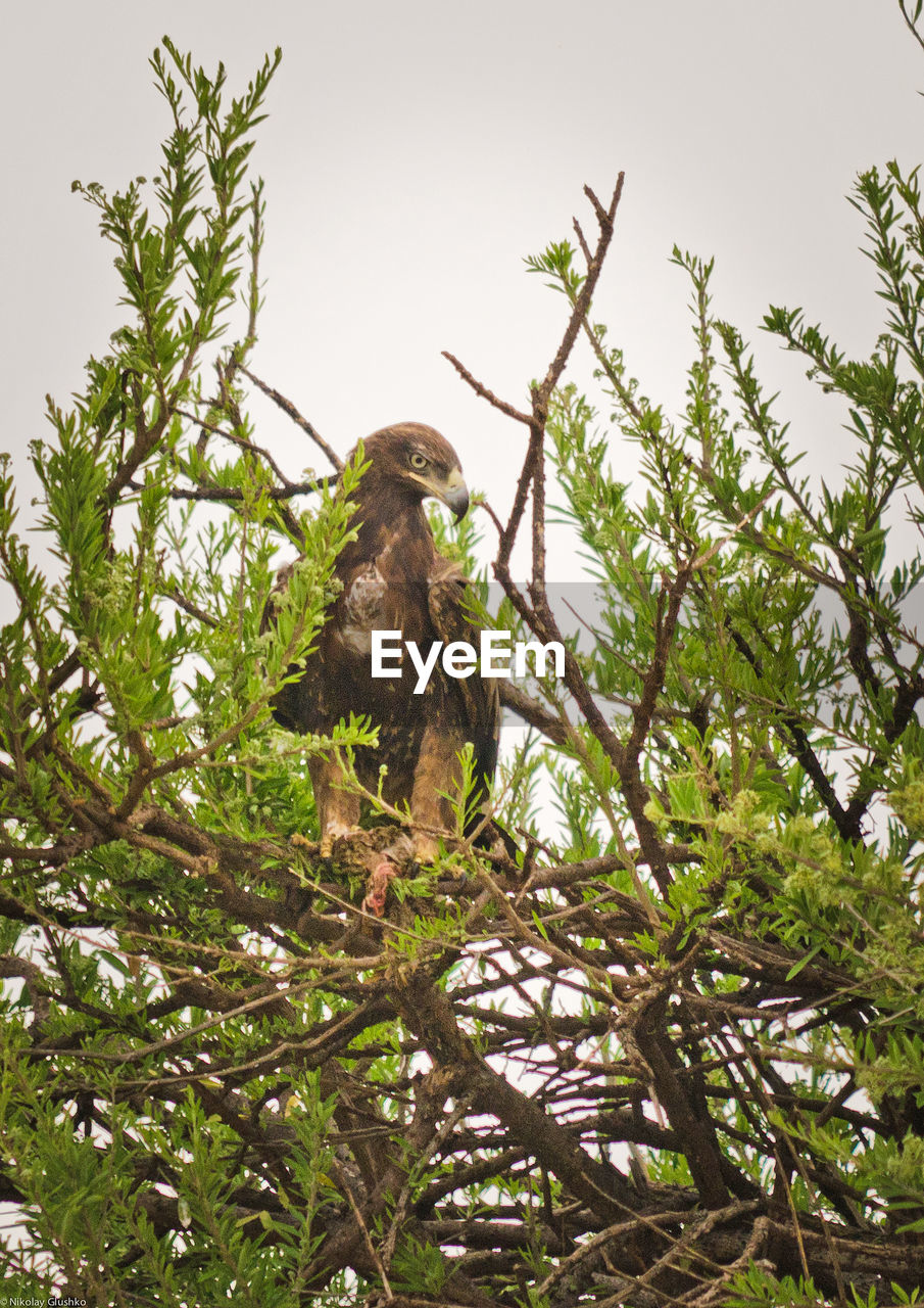 tree, low angle view, monkey, no people, nature, animal themes, animals in the wild, branch, day, outdoors, bird, mammal, sky
