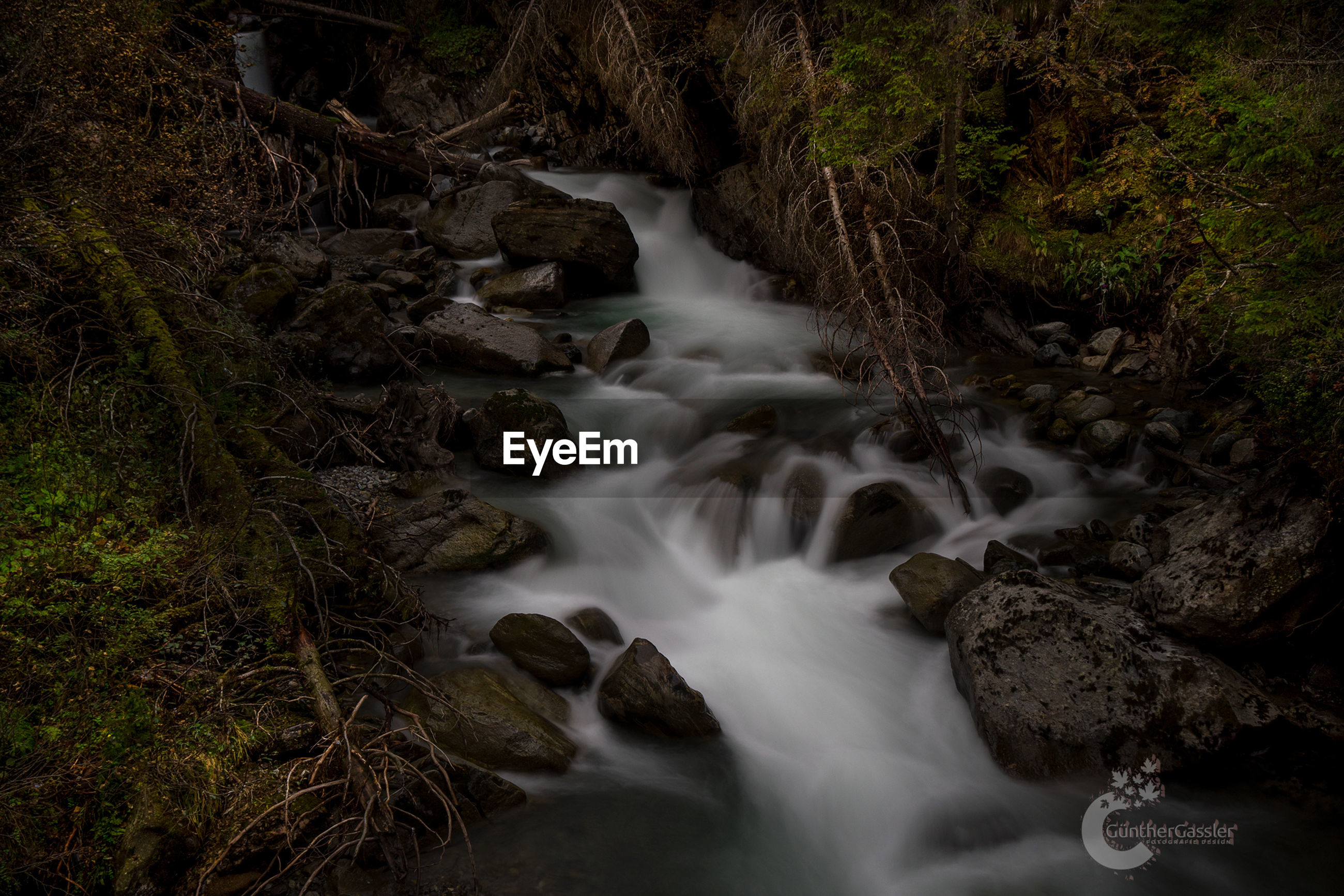 motion, long exposure, water, rock, blurred motion, land, beauty in nature, rock - object, no people, solid, forest, flowing water, scenics - nature, nature, flowing, tree, day, plant, stream - flowing water, rainforest