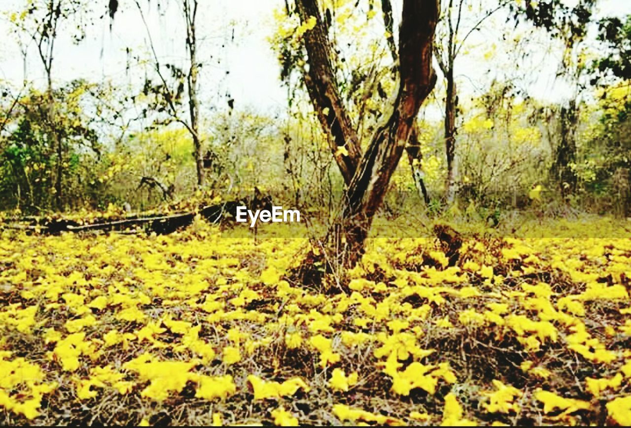 nature, tree, growth, day, no people, yellow, beauty in nature, outdoors, field, landscape, flower, animal themes