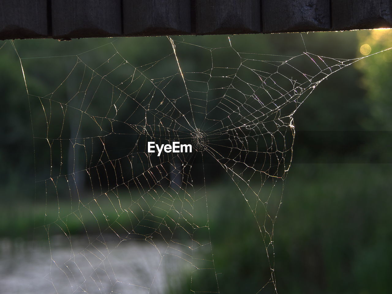 CLOSE-UP OF SPIDER WEB AGAINST STAR SHAPE