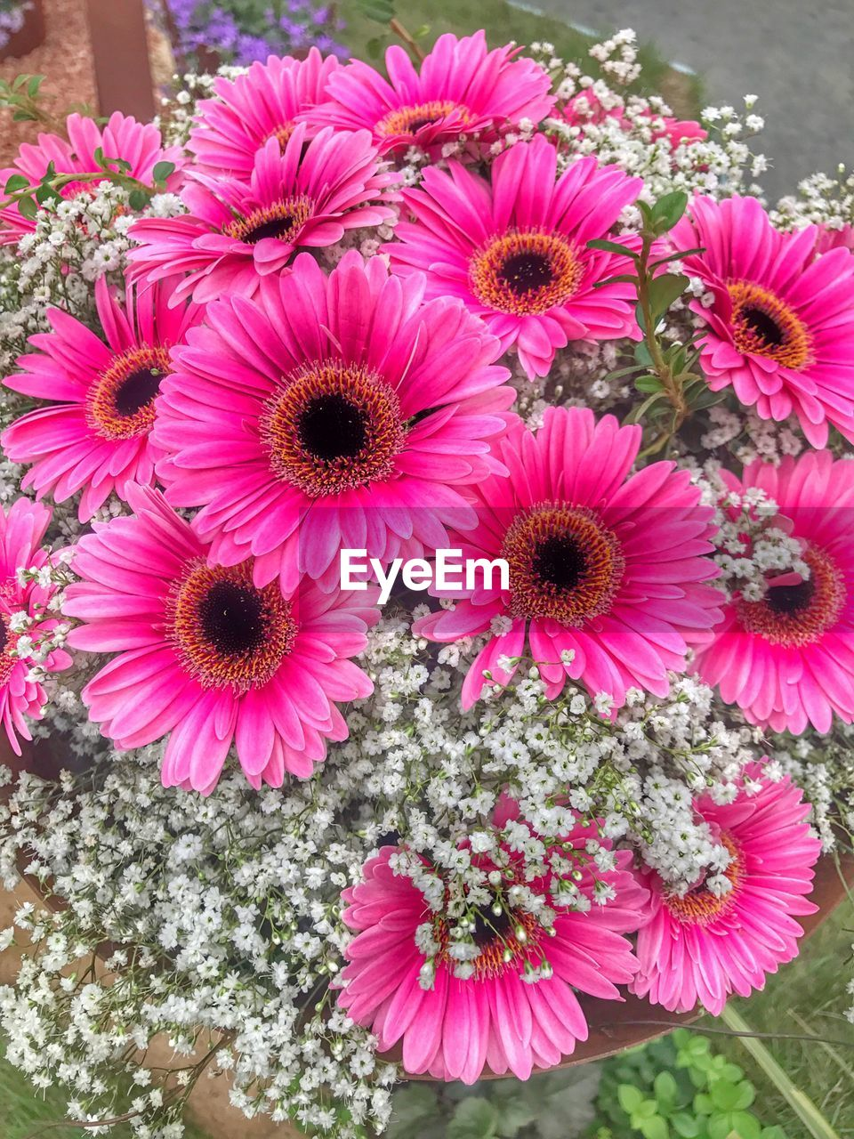 flower, petal, nature, growth, fragility, beauty in nature, freshness, flower head, pink color, no people, plant, blooming, outdoors, close-up, day