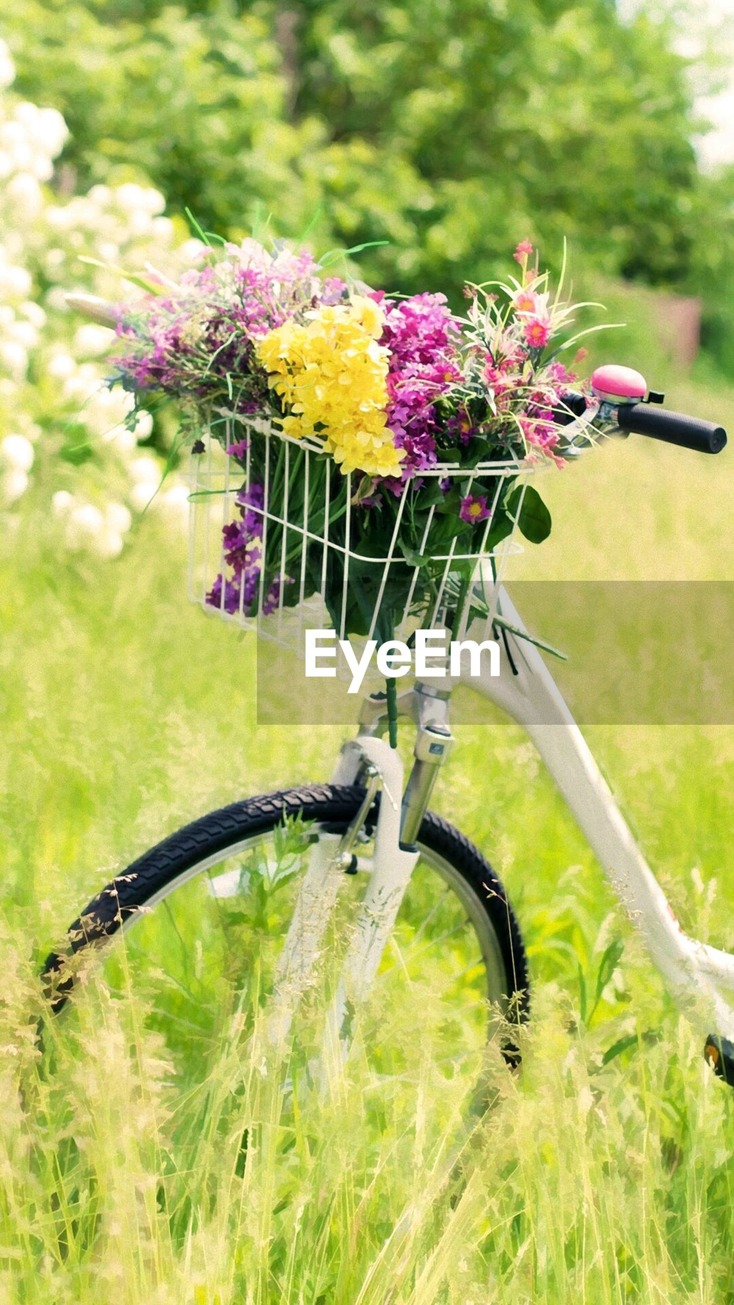 flower, bicycle, day, nature, no people, focus on foreground, outdoors, plant, transportation, land vehicle, fragility, close-up, grass, freshness, flower head, springtime, beauty in nature