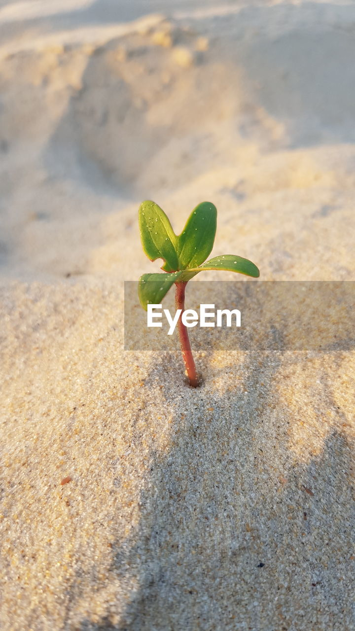 High Angle View Of Small Plant On Sand