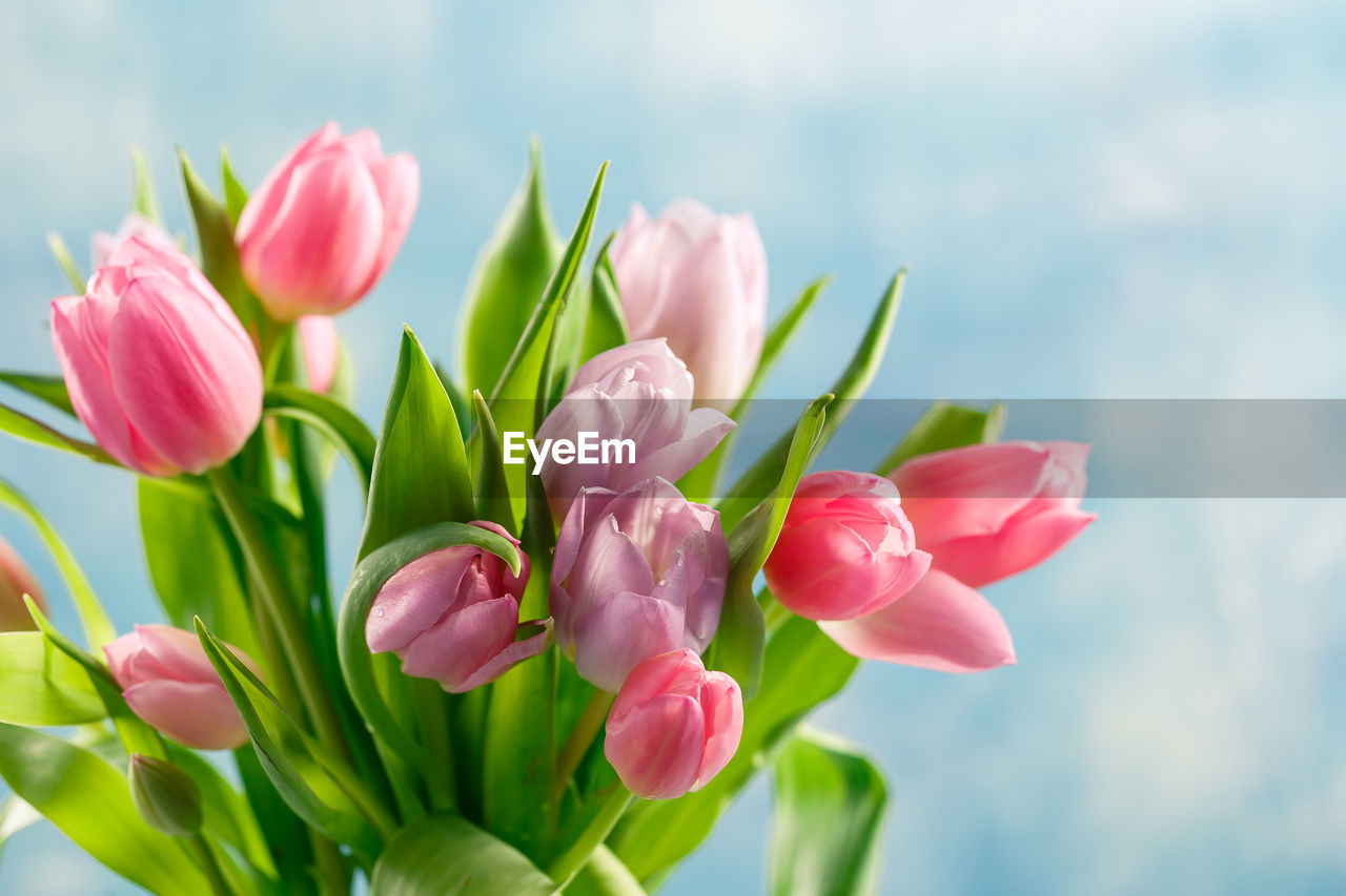 flower, flowering plant, beauty in nature, plant, vulnerability, fragility, freshness, pink color, close-up, petal, growth, nature, flower head, inflorescence, focus on foreground, tulip, no people, plant part, leaf, plant stem, outdoors, flower arrangement, bouquet
