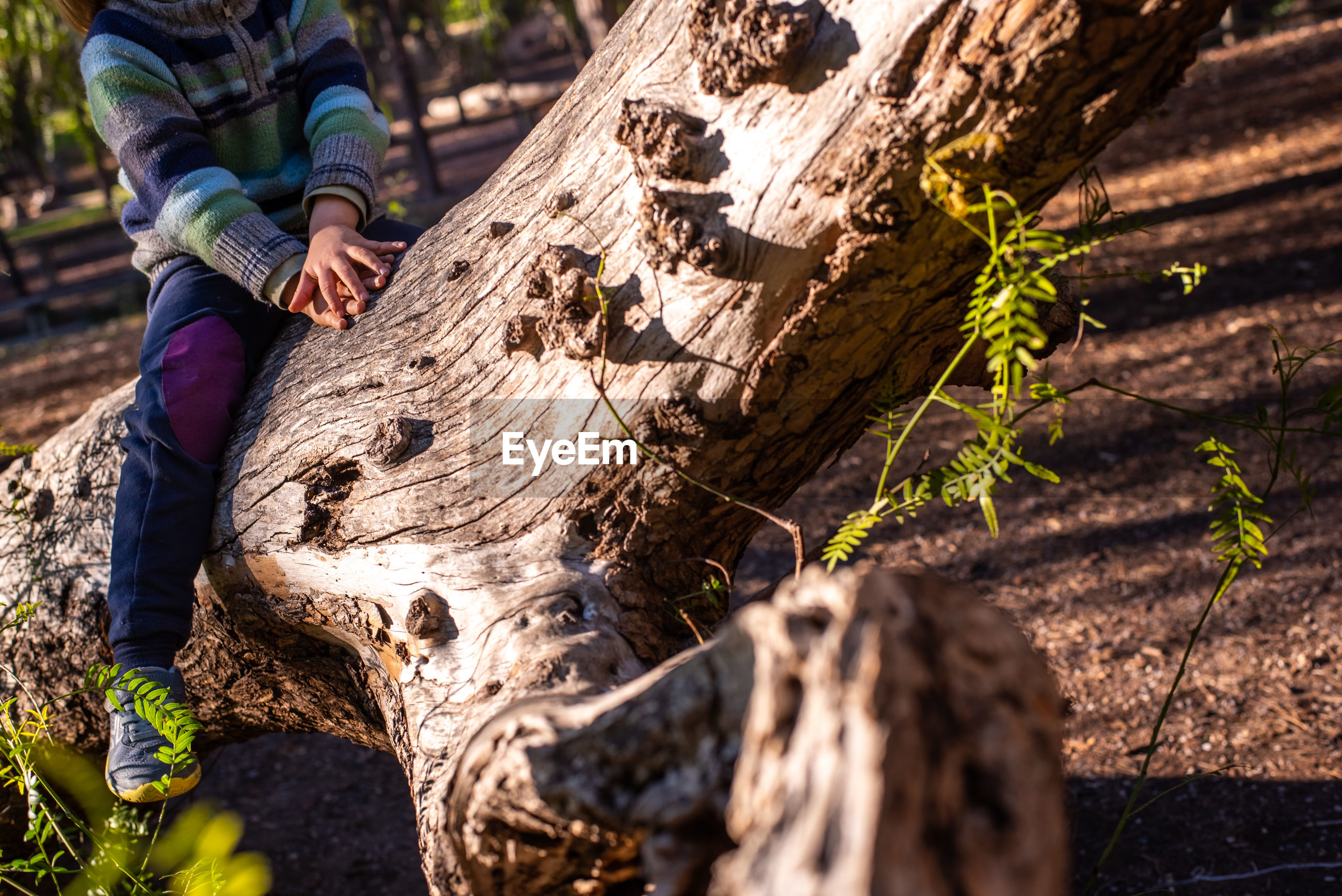 Low section of boy sitting on tree trunk