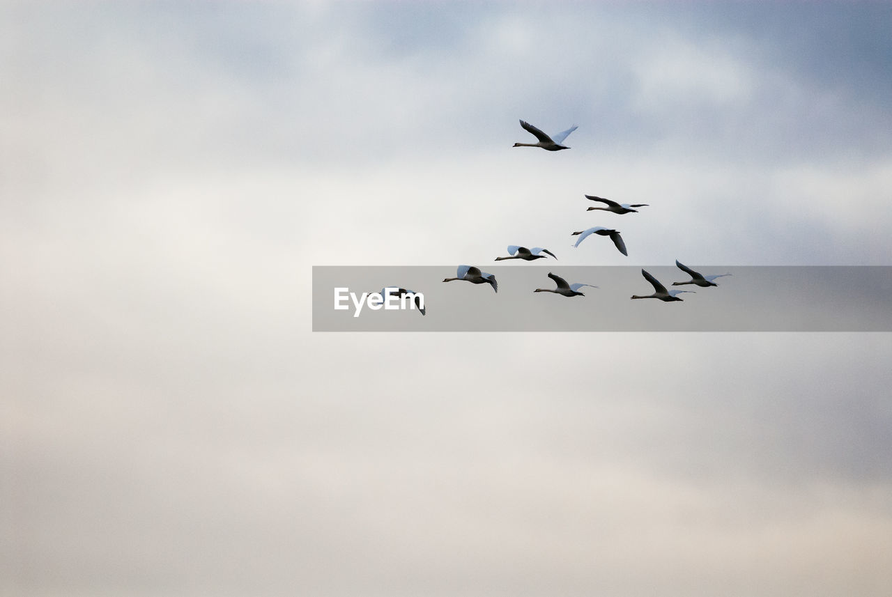 flying, animals in the wild, sky, animal themes, group of animals, animal wildlife, bird, animal, vertebrate, low angle view, cloud - sky, mid-air, no people, large group of animals, flock of birds, spread wings, motion, nature, beauty in nature, day