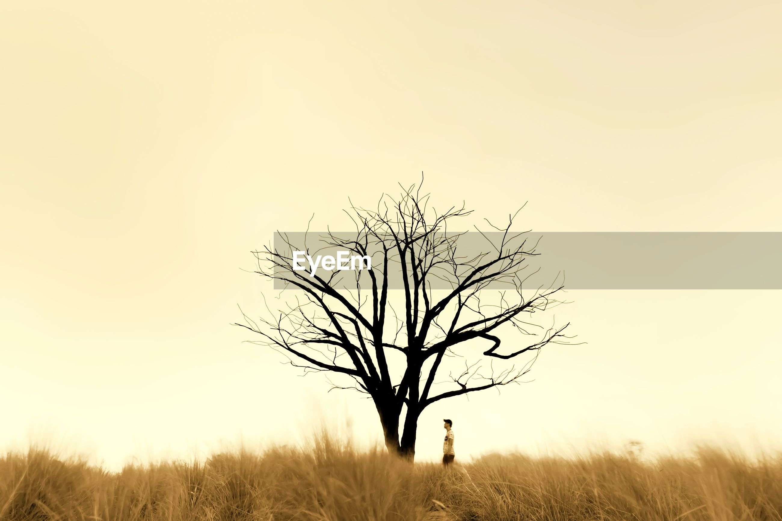 A man standing beside a lone bare tree on a field against clear sky