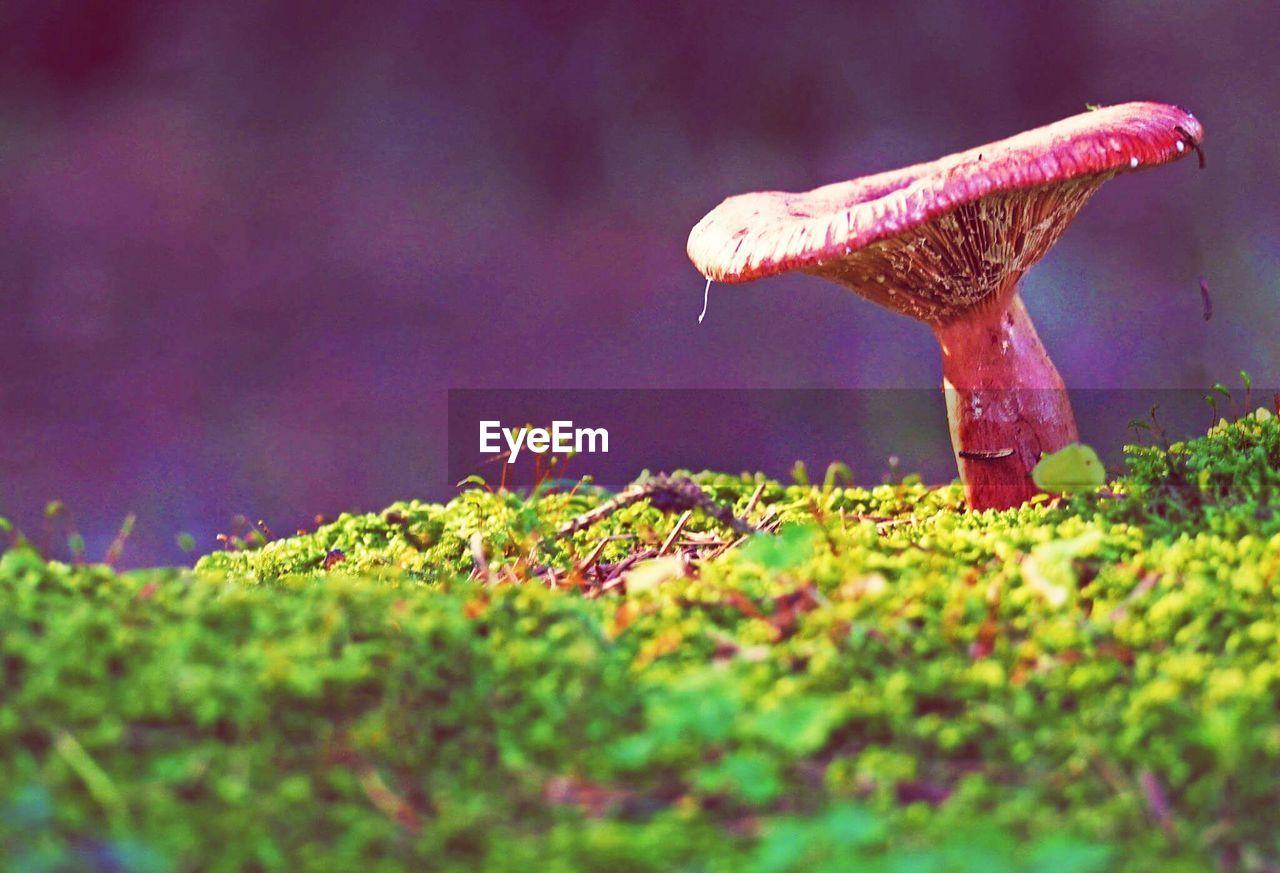 Close-Up Surface Level Of Mushroom