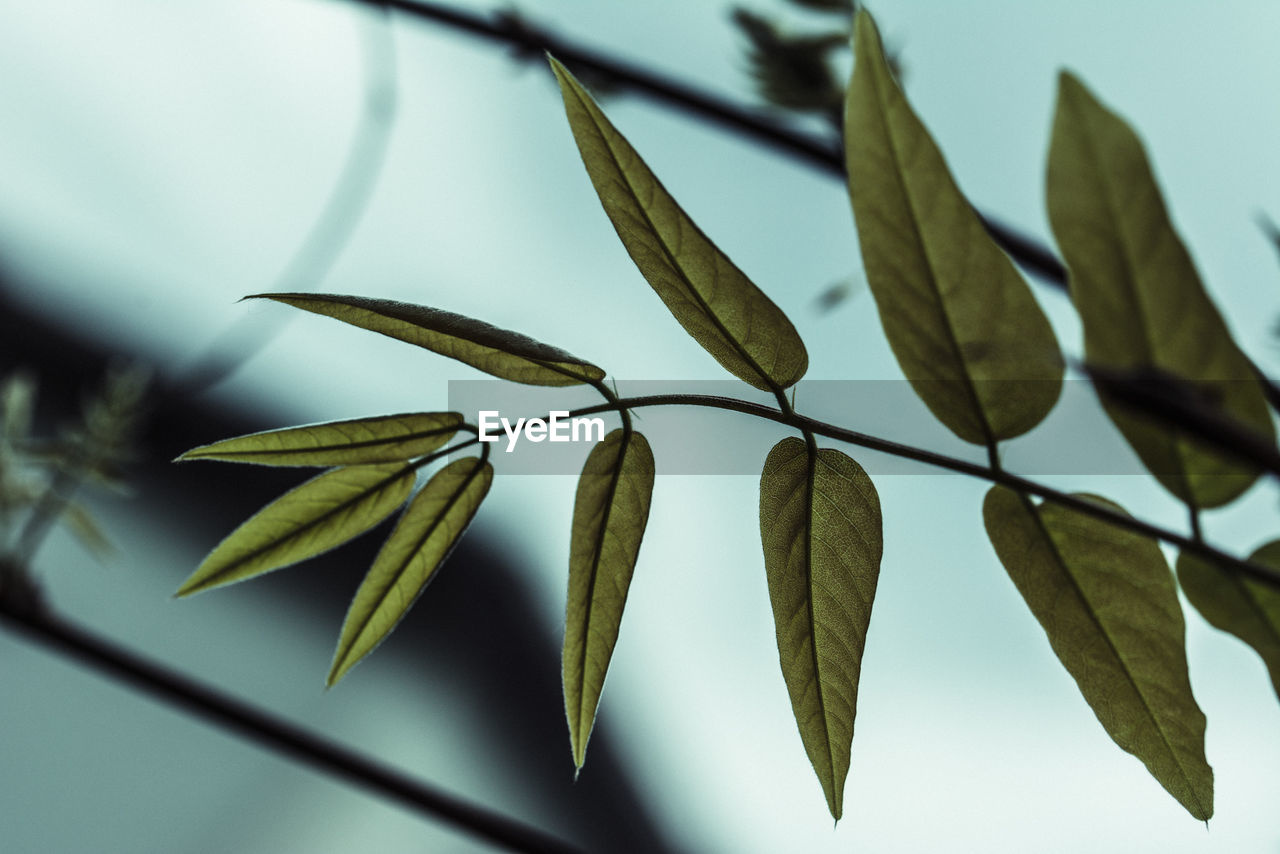 Close-up of leaves outdoors