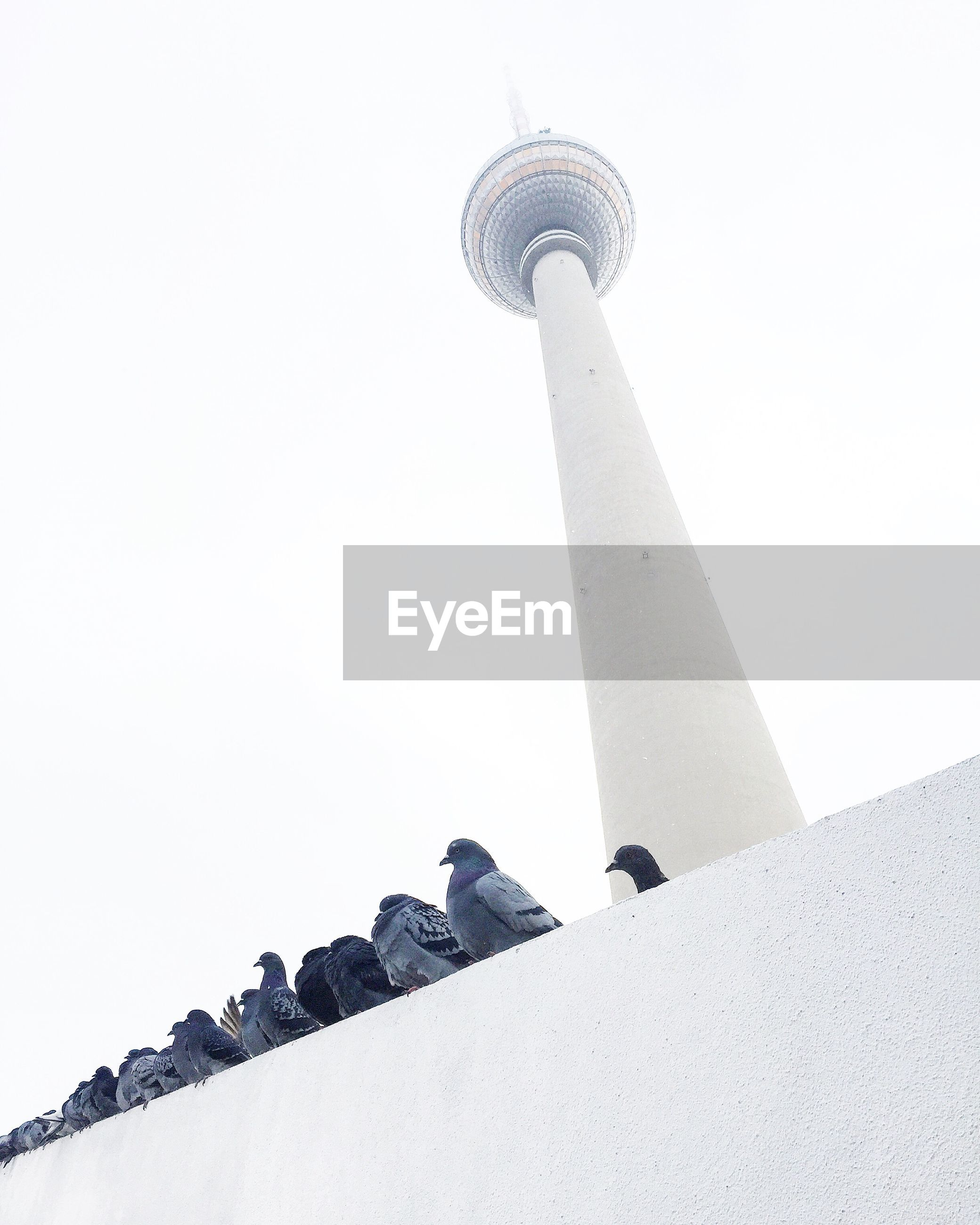 Low angle view of pigeons on wall in front of fernsehturm tower against sky