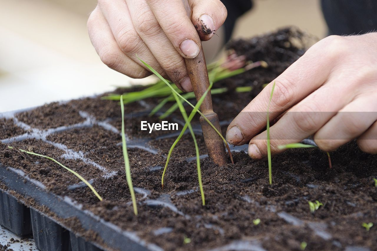 Close-Up Of Cropped Hands Planting Seedlings In Tray
