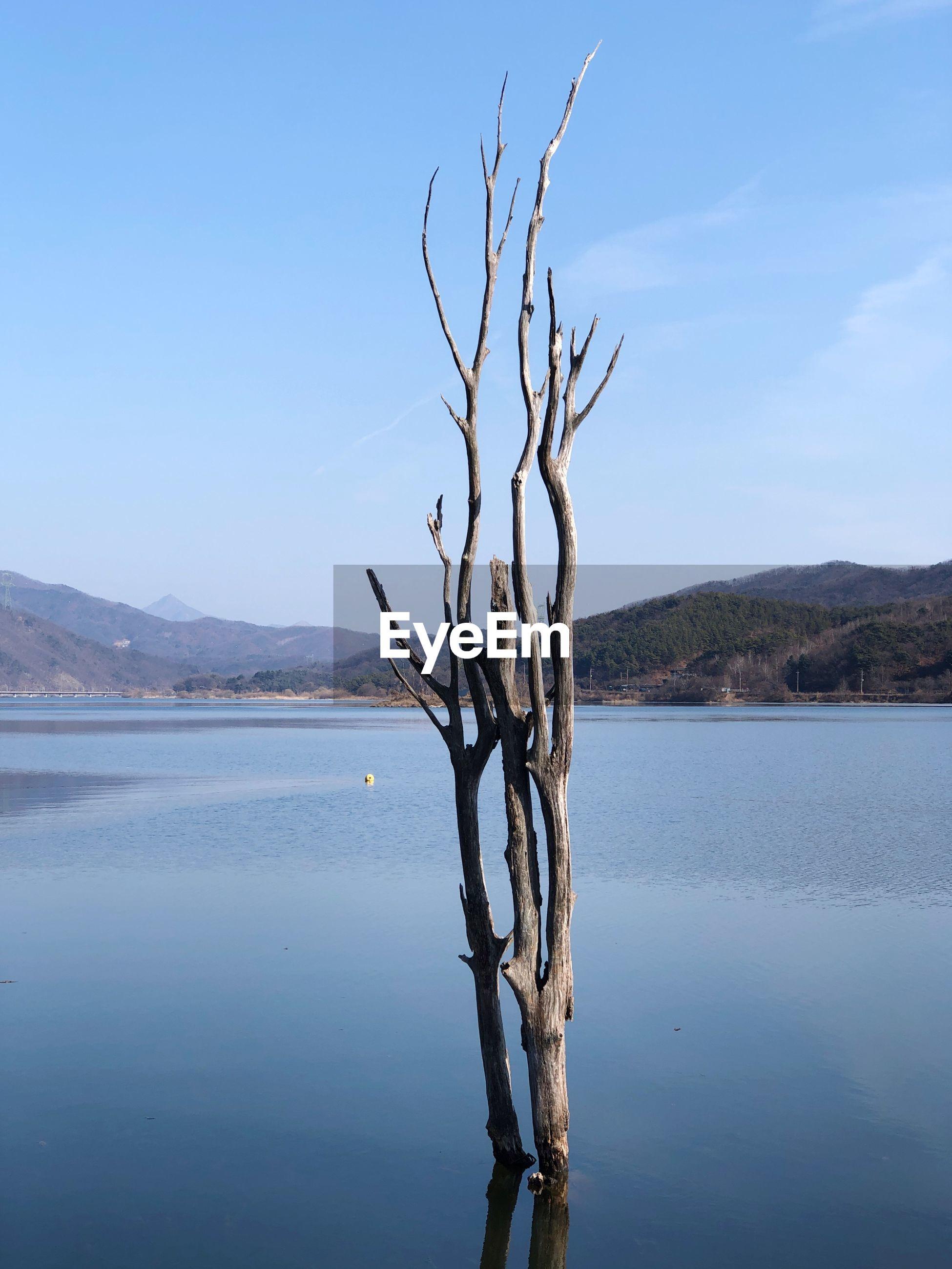 BARE TREE ON LAKE AGAINST SKY