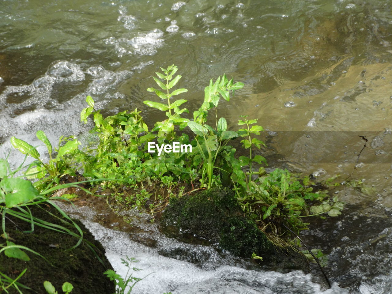 water, high angle view, motion, nature, rock - object, river, day, no people, outdoors, plant, waterfall, leaf, beauty in nature, freshness, close-up