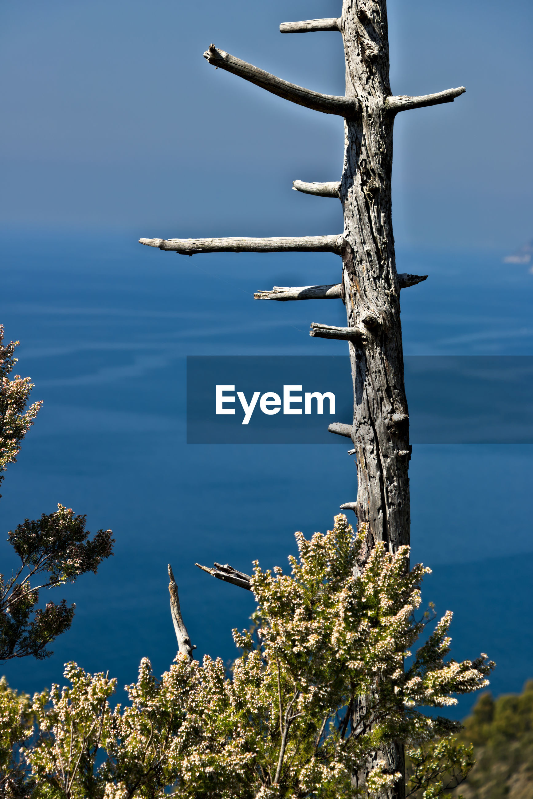 SCENIC VIEW OF TREE AGAINST SEA