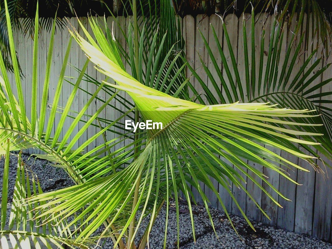 Close-Up Of Palm Plant