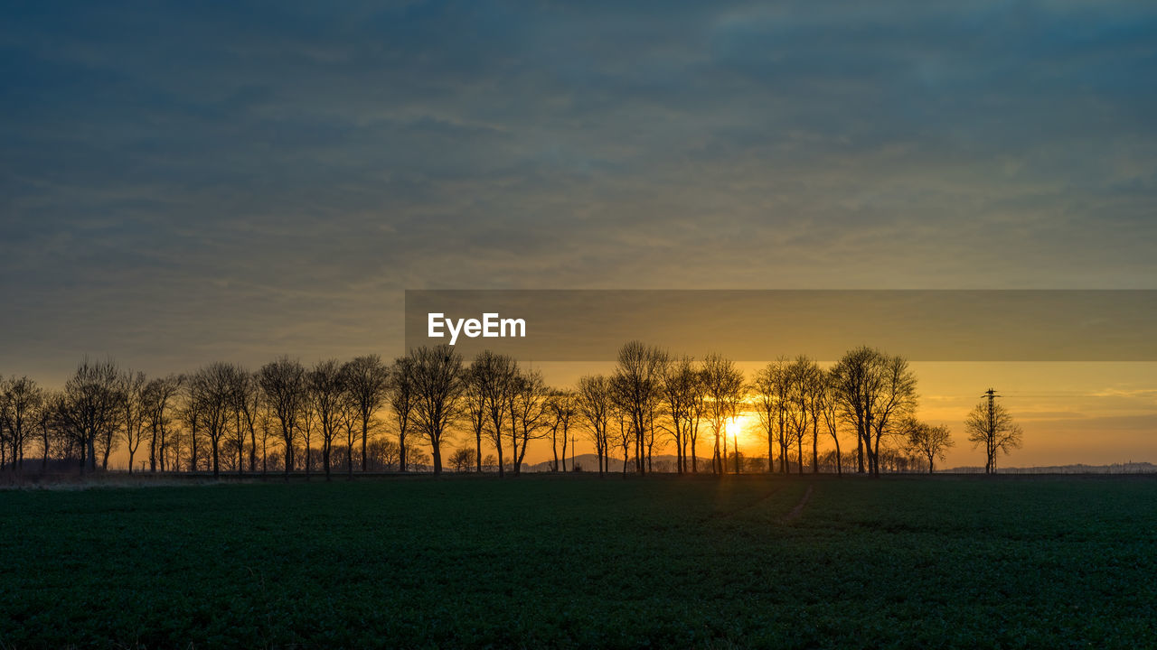SILHOUETTE TREES ON FIELD AGAINST SUNSET SKY