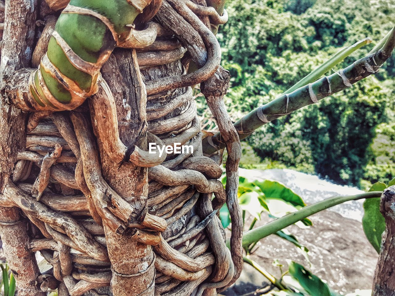 strength, day, rope, focus on foreground, no people, close-up, metal, nature, tied up, outdoors, tree, plant, connection, wood - material, twisted, rusty, pattern, land, equipment, textured, complexity, tangled