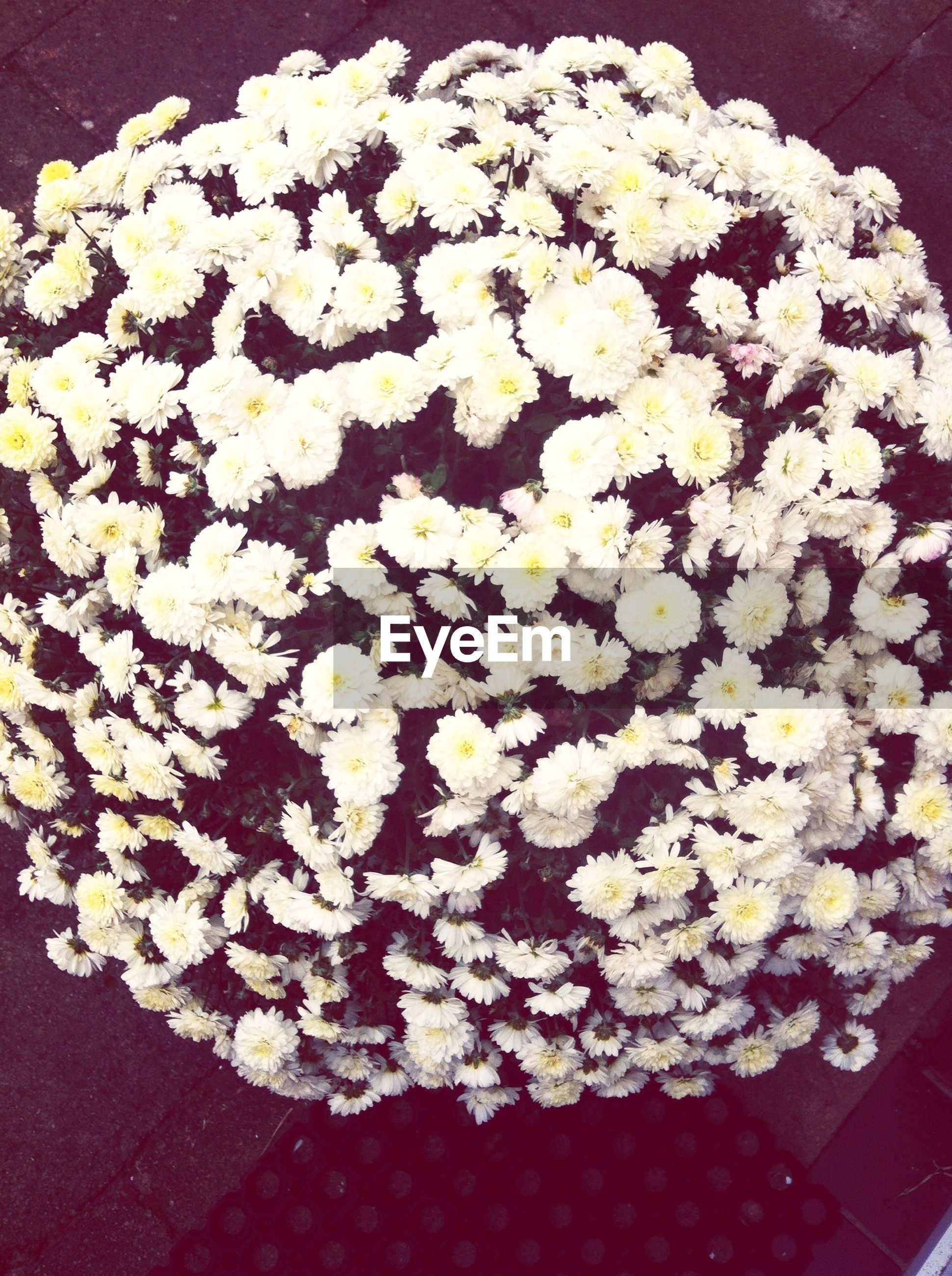 flower, petal, freshness, white color, fragility, flower head, high angle view, beauty in nature, blooming, growth, nature, indoors, white, blossom, plant, in bloom, no people, bunch of flowers, vase, close-up