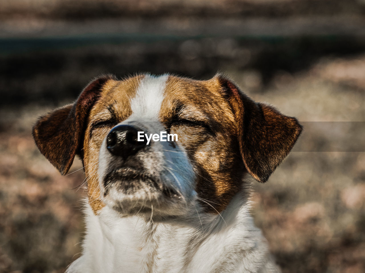 one animal, animal themes, pets, domestic, mammal, domestic animals, animal, canine, dog, close-up, focus on foreground, vertebrate, animal body part, day, animal head, no people, looking, portrait, outdoors, looking away, whisker