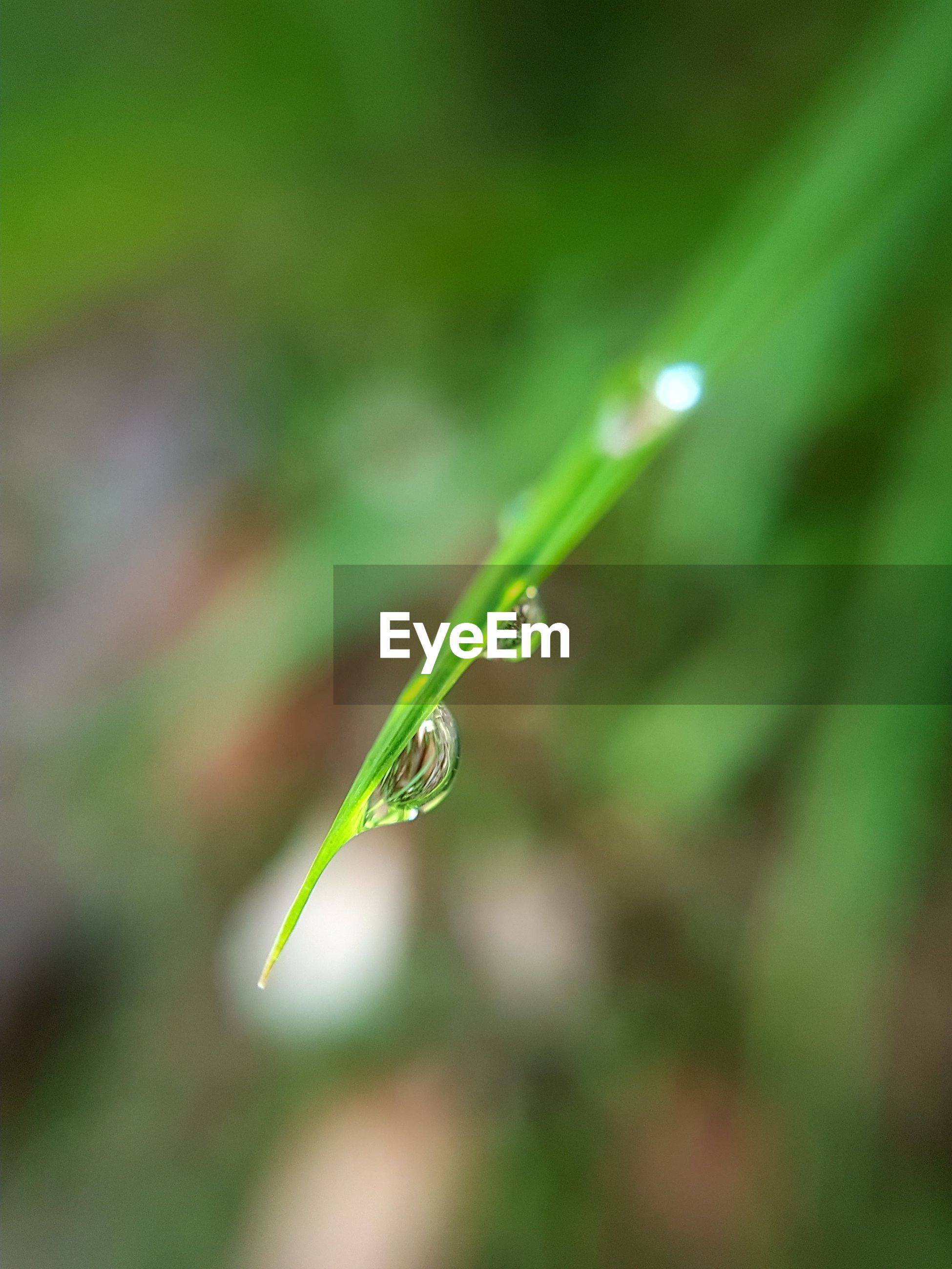 CLOSE-UP OF DROP ON GRASS