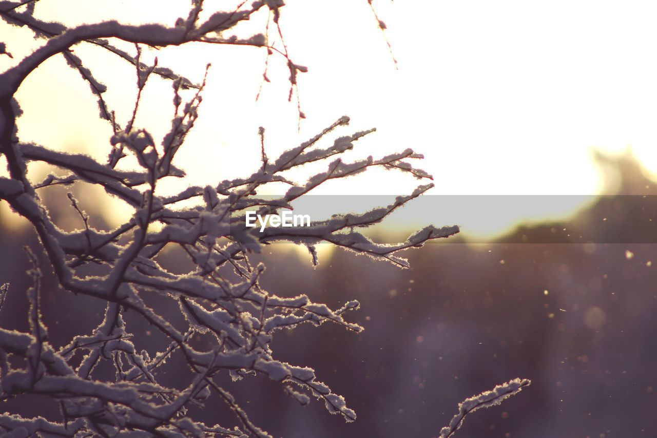 plant, cold temperature, sky, tree, winter, snow, nature, branch, beauty in nature, no people, focus on foreground, close-up, day, tranquility, frozen, ice, outdoors, growth, sunset, lens flare, extreme weather, cold, blizzard