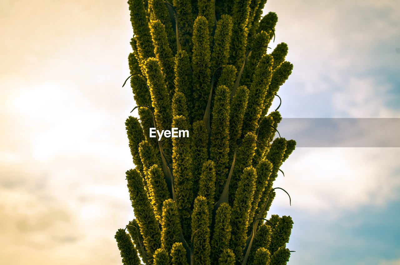 growth, sky, plant, beauty in nature, green color, no people, cloud - sky, nature, outdoors, close-up, day, focus on foreground, tranquility, low angle view, freshness, sunlight, scenics - nature, tree, succulent plant, sunset