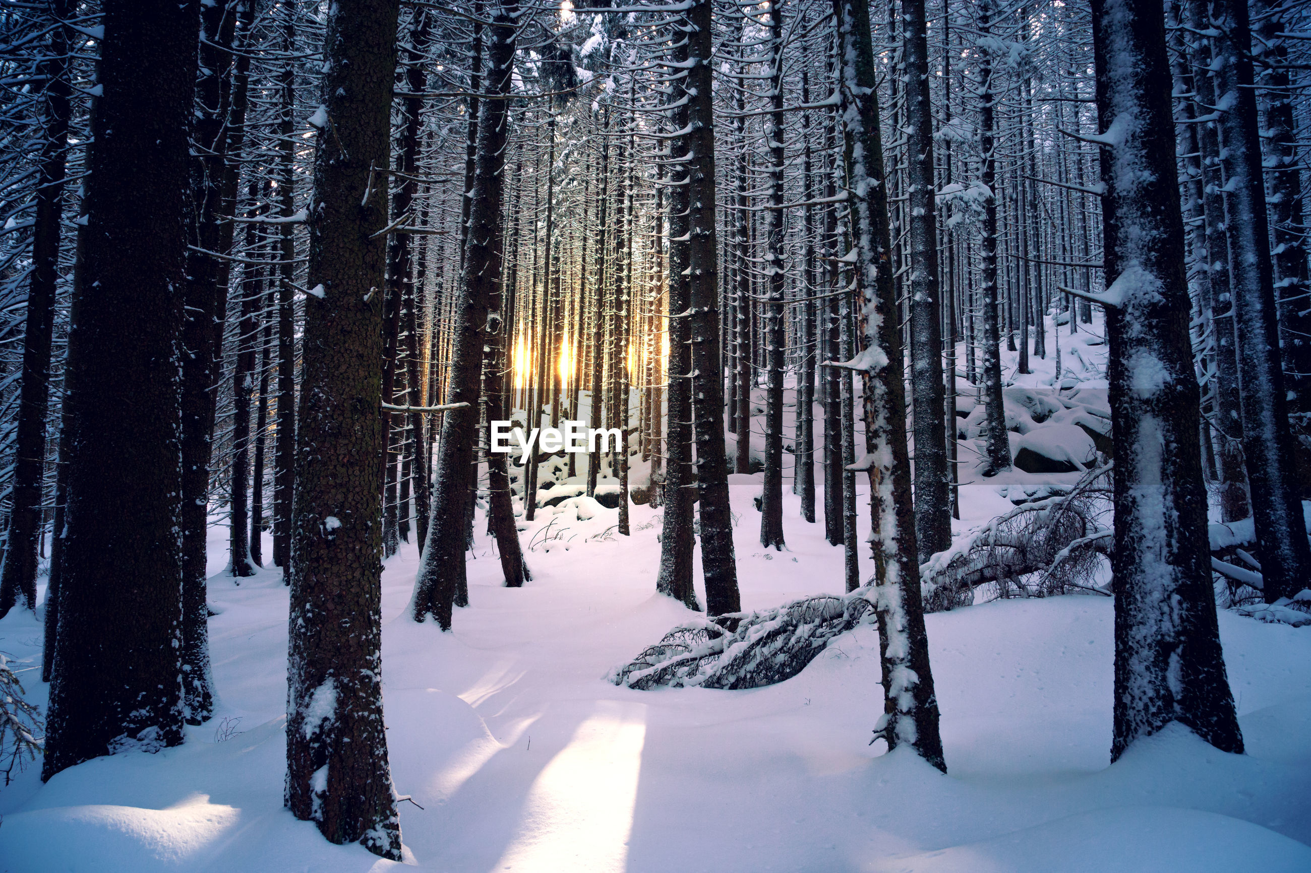 Sunset in deep snowy forest