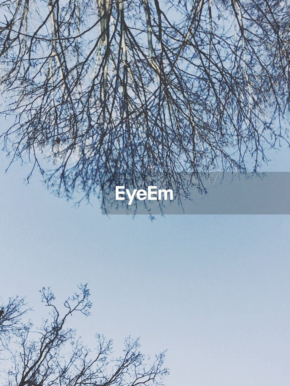 tree, branch, nature, beauty in nature, low angle view, bare tree, clear sky, no people, day, outdoors, growth, tranquility, sky, flower, scenics, fragility, freshness