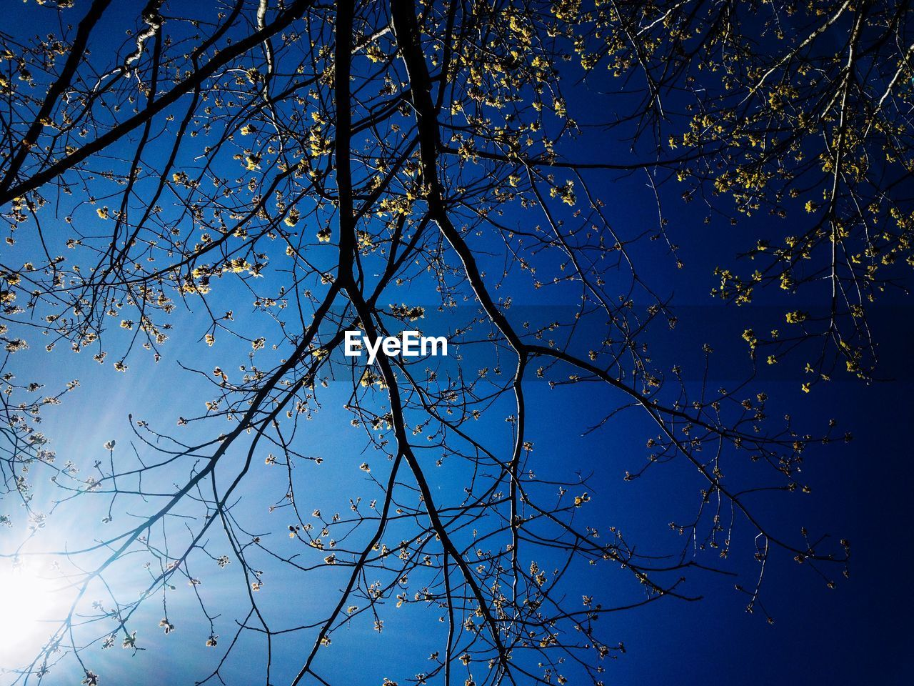 tree, sky, branch, plant, low angle view, beauty in nature, nature, no people, blue, growth, clear sky, tranquility, day, outdoors, bare tree, sunlight, scenics - nature, silhouette, autumn, tree canopy, spring