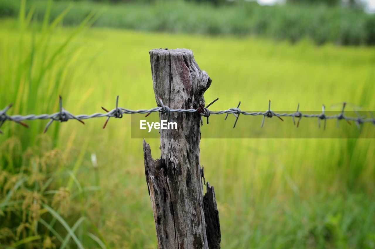 safety, fence, protection, security, wire, barrier, boundary, barbed wire, plant, field, focus on foreground, wood - material, nature, land, green color, grass, day, no people, metal, animal, post, wooden post, outdoors