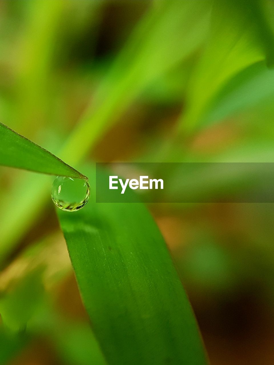 green color, drop, nature, leaf, growth, close-up, beauty in nature, water, no people, plant, focus on foreground, day, outdoors, fragility, freshness, animal themes