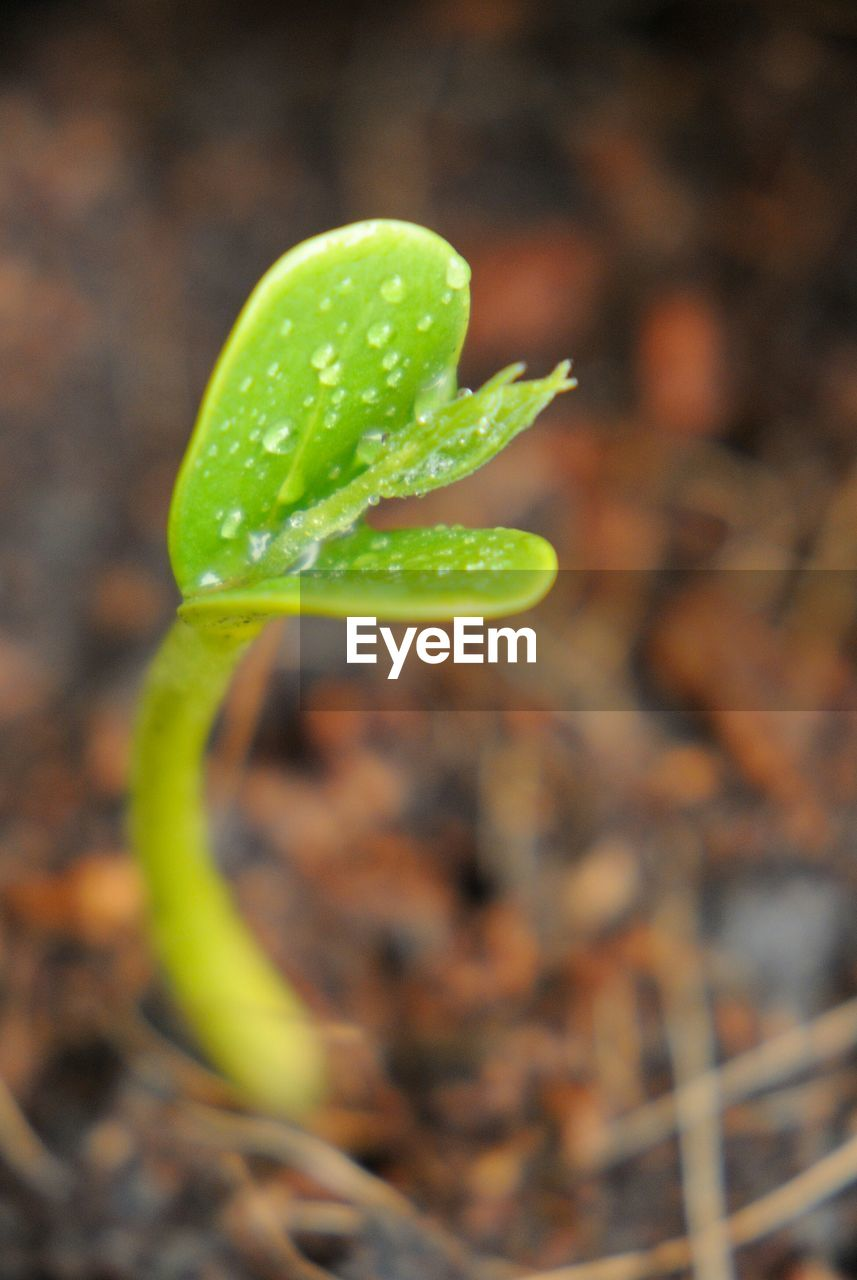 Close-up of wet plant seedling on field