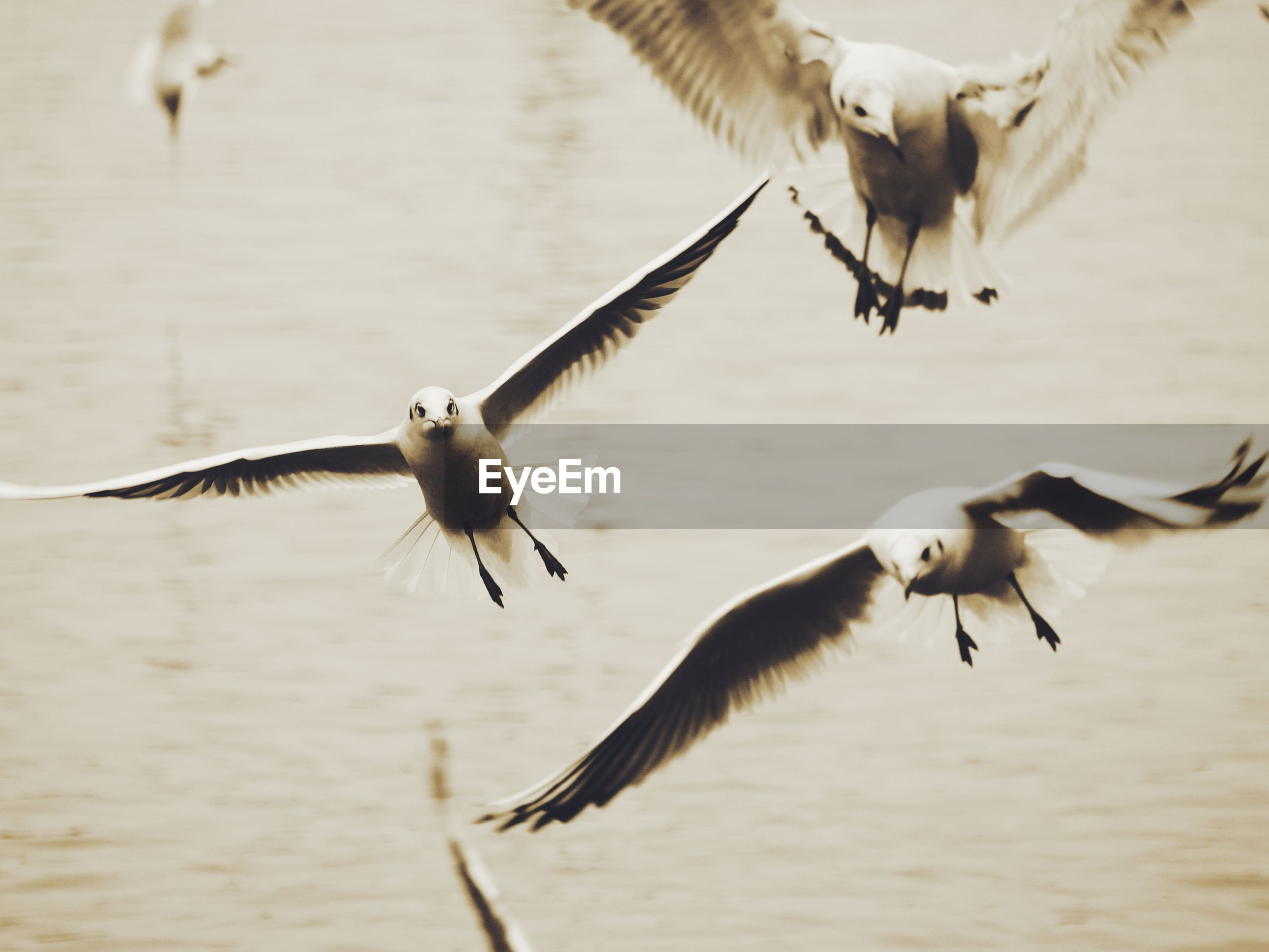 SEAGULLS FLYING IN A BIRD